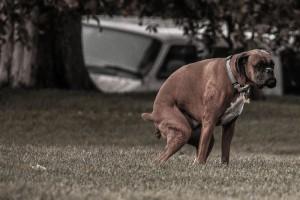 Kellemetlen dolog a kutyagumi