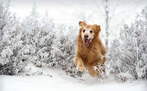 téli állattartás
